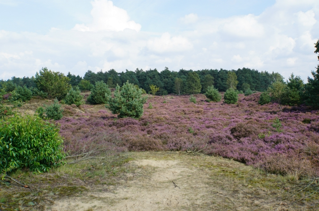 Tips-Veluwe